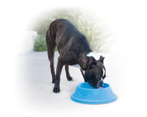 Cooling Bowl bol rafraichissant eau fraiche chien 1 litre illustration