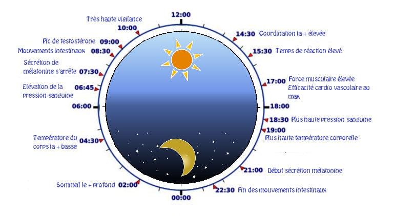 horloge-biologique - carpé zen